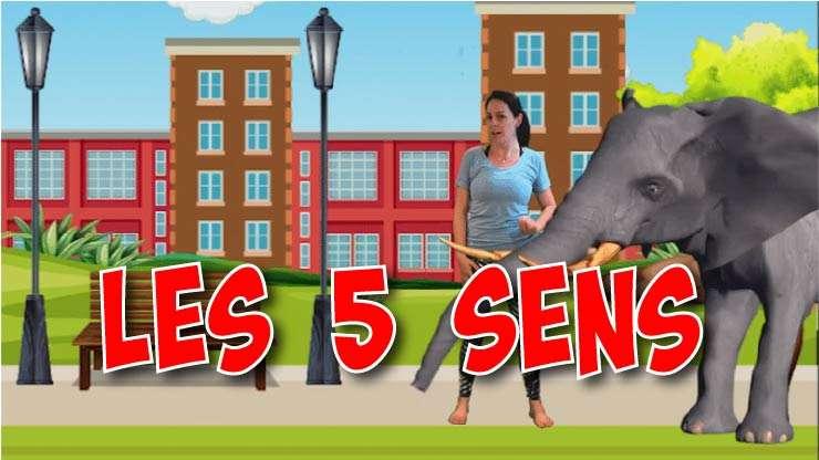 MY_Les 5 sens
